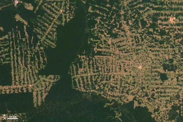 Se acelerala deforestación de la Amazonia